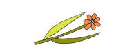 side_flower